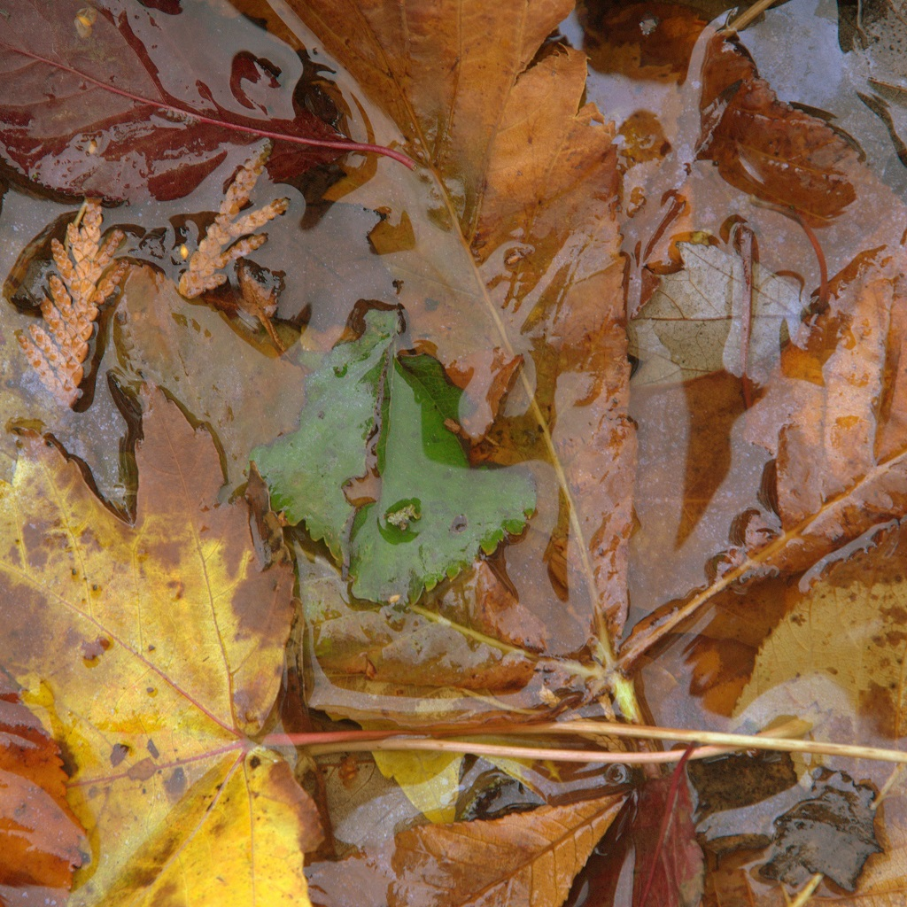 Leaves - JPEG - colored